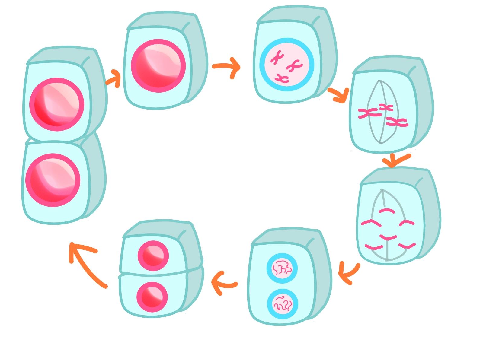 生殖 クイズ